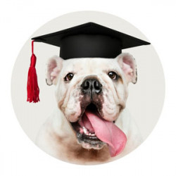 Happy Groomed Dog - Continuing Education for Dog groomer Florida